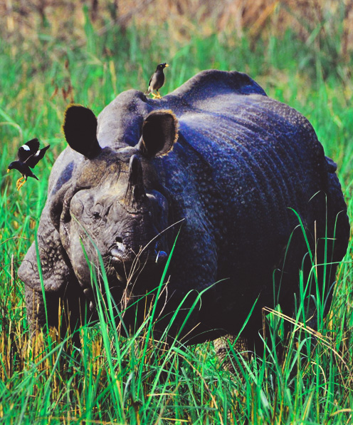 HIGHLIGHTS OF INDIA AND NEPAL WILDLIFE
